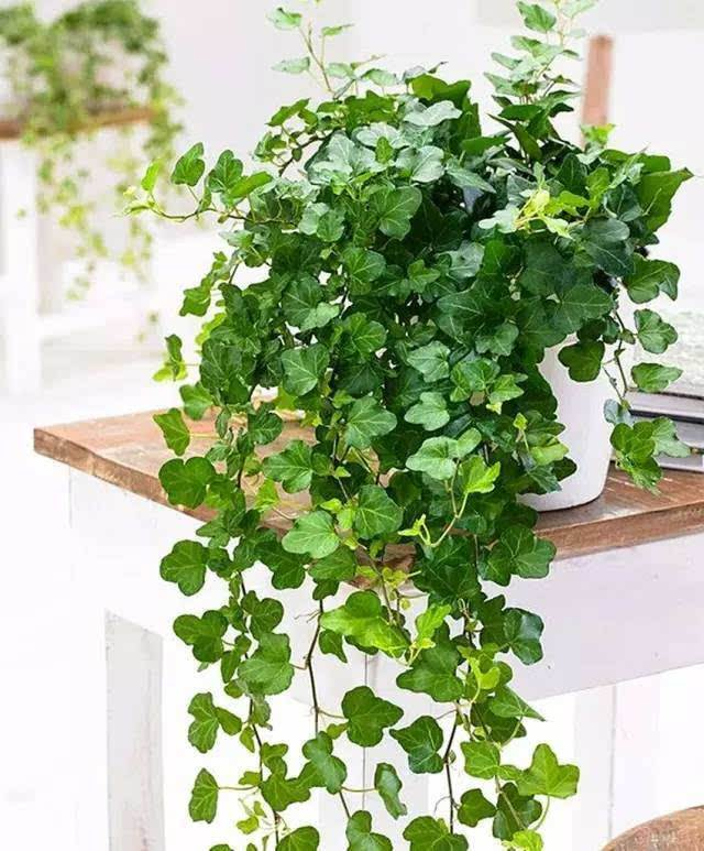 房屋装修去甲醛植物.jpg
